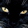 Fiona The Tuxedo Cat by Ed  Riche