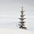 Fir Tree And Lots Of Snow In Winter Kleinwalsertal Austria by Matthias Hauser
