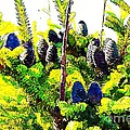 Fir Tree Buds Abstract by Barbara Griffin