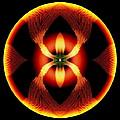 Fire Ant by Visual Artist Frank Bonilla