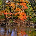 Fire In The Creek A1 - Owens Creek Near Loys Station Covered Bridge - Autumn Frederick County Md by Michael Mazaika