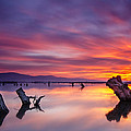 Fire In The Sky by Andrey Trifonov