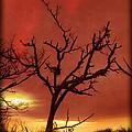 Fire In The Sky by Debra and Dave Vanderlaan