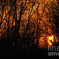 Fire In The Woods Sunset by Thomas Woolworth