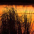 Fire On The Marsh by Jim Garrison