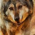 Fire Wolf by Ernie Echols