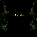 Firefly by GJ Blackman