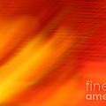 Firelight O by Susan Herber