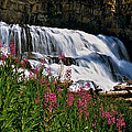 Fireweed Blooms Along The Banks Of Granite Creek Wyoming by Ed  Riche