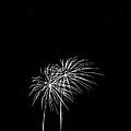 Firework Palm Trees by Darryl Dalton