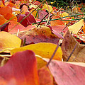 First Day Of Fall by Andrea Anderegg