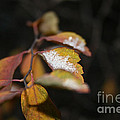 First Dusting by Susan Herber