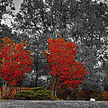 First Fall Color In Red by John Straton