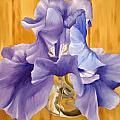 First Iris Of The Season by Tessa Barsic