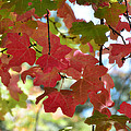 First Signs Of Fall  by Saija  Lehtonen