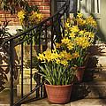 First Signs Of Spring by Jacklyn Duryea Fraizer