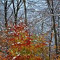 First Snow 2 by April Patterson