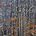 First Snow 3 by April Patterson