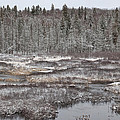 First Snow-algonquin Provincial Park by Harry Cartner