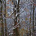 First Snow by April Patterson