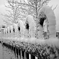 First Snow by Elaine Mikkelstrup