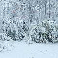 First Snow by Richard Kitchen