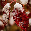 First Snow by Webb Canepa