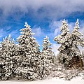 First Snowfall by Don Bendickson
