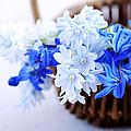 First Spring Flowers by Elena Elisseeva