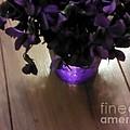 First Violets by Elizabeth Scriba