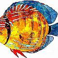 Fish 502-11-13 Marucii by Marek Lutek