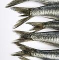 Fish by Bernard Jaubert
