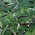 Fish by Bob Slitzan