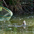 Fish Caught On A Line In Water by Simon Bratt Photography LRPS