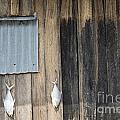 Fish Drying Outside Rustic Fisherman House by Jacek Malipan