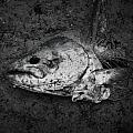Fish Head by Mister Graves