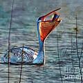 Fish In by John  Kolenberg