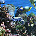 Fish - National Aquarium In Baltimore Md - 1212113 by DC Photographer