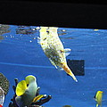 Fish - National Aquarium In Baltimore Md - 1212117 by DC Photographer