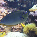 Fish - National Aquarium In Baltimore Md - 1212121 by DC Photographer