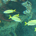 Fish - National Aquarium In Baltimore Md - 1212141 by DC Photographer