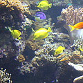 Fish - National Aquarium In Baltimore Md - 121246 by DC Photographer
