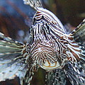 Fish - National Aquarium In Baltimore Md - 121263 by DC Photographer