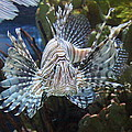 Fish - National Aquarium In Baltimore Md - 121266 by DC Photographer