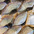Fish Scales Background by Odon Czintos