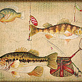 Fish Trio-a-basket Weave Border by Jean Plout
