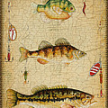 Fish Trio-c-basket Weave by Jean Plout