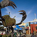 Fishermans Wharf Crab by David Smith