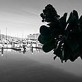 Fisherman's Wharf  by Fabien White