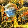 Fishfull Thinking by Debbi Granruth